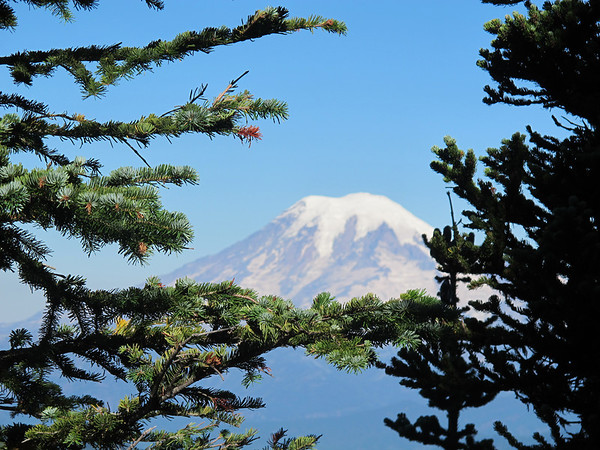 Dropping altitude - Mt. Rainier peeking through the trees.